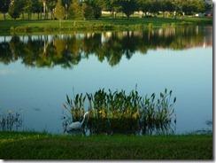 Condo Lake (800x600)