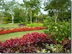 Naples Garden14 (800x600)