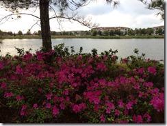 azaleas lake